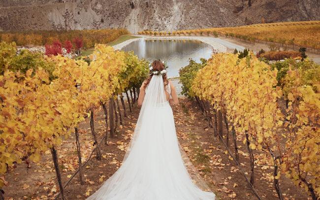 Bride in a fall vineyard